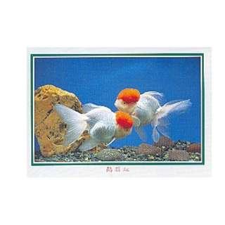 GDF-25-香港明信片-金魚-鶴頂紅(1左1右),新穎,尺寸-16.2X11.4CM