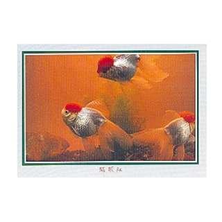 GDF-27-香港明信片-金魚-鶴頂紅(3條),新穎,尺寸-16.2X11.4CM