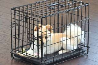 Pet Dog Cage Collapsible With Black Tray