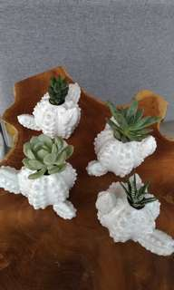 Succulents in Cactus Planters
