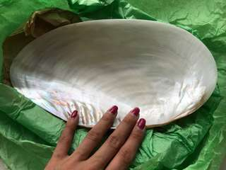 Seashell rounded plate