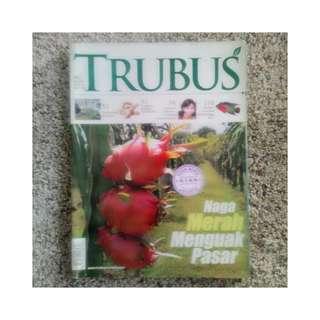 Majalah Trubus - Naga Merah Menguak Pasar