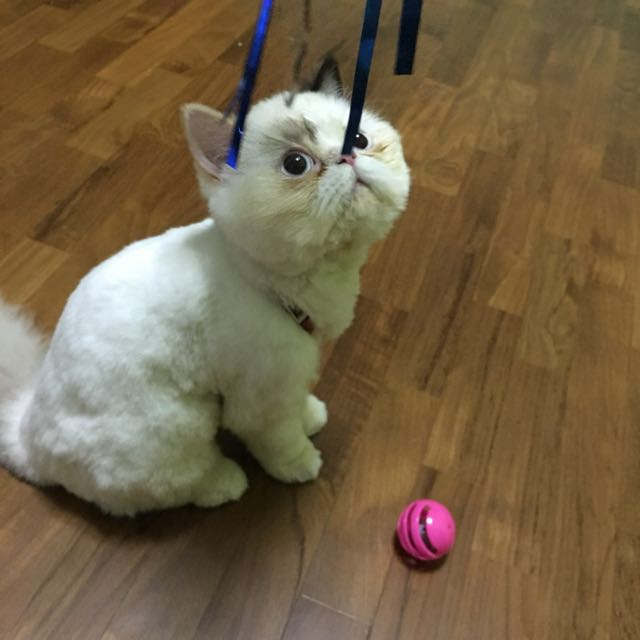 Home Based Pet Boarding - Cats / Dogs / Hamster / Rabbit