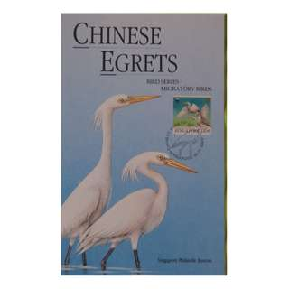 Bird Series - Migratory Birds - Chinese Egrets