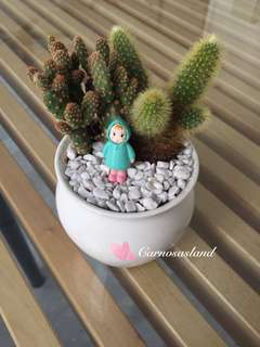 Cactus with white pot