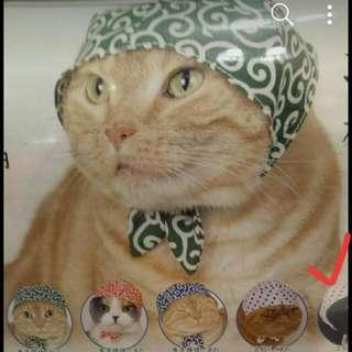 【日本扭蛋】寵物帽子貓奴必買款!
