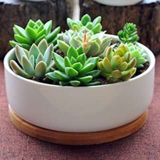 Flower Pot with Bamboo Tray