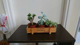 Plants with Wooden Case Sell For 50