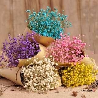 Coloured Baby Breaths Bouquet /  Flower Bouquet