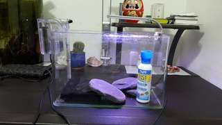 二手一呎缸(送增艷夾燈、外掛式過濾器、水質穩定劑、板岩3塊、生化棉一塊)