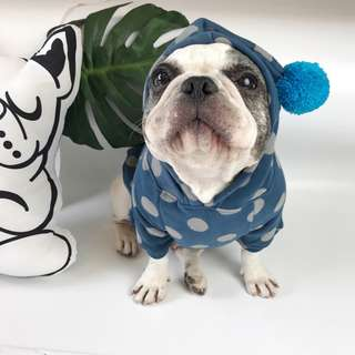 cats_日系 淘氣藍點點秋冬加絨衣服 / 貓狗都能穿尺寸多