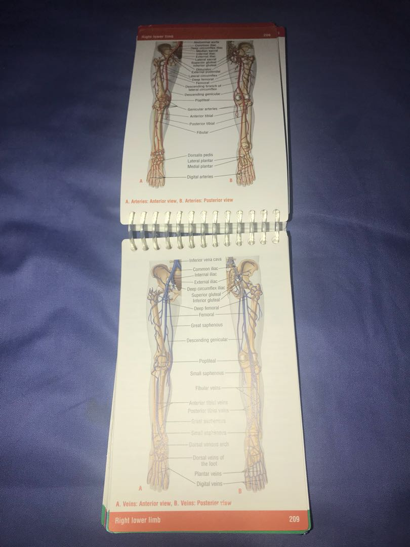 Charmant Anatomy And Physiology Pocket Book Bilder - Anatomie Ideen ...