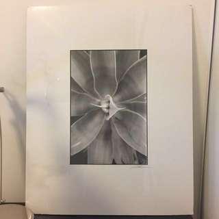 Unframed Photo