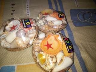 Shells!!!