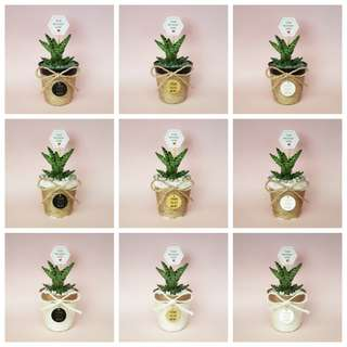🌵🌱 Small Cactus & Succulents in Personalised Pot (Bottom Wrapped Series)