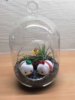 Mother's Day Airplant Terrarium