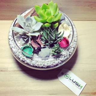 Perfect Gift for Mother's Day/ Father's Day/ Christmas/ Xmas/ Birthday/ Congrats/ Farewell/ House warming/ Anniversary- Real Plant Succulents/ Cactus Terrarium