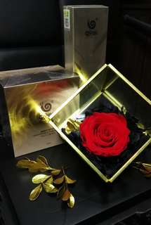 Mothers Day Gift - Preserved Flower/Roses + WOWO Product Series