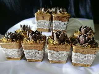 succulents in coco pot rustic theme