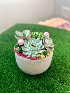 Succulents arrangement in Cement Bowl