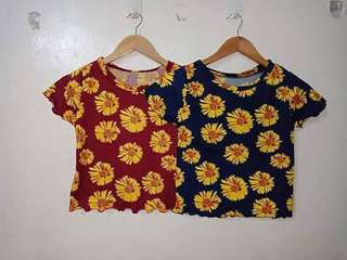 Croptop sunflower