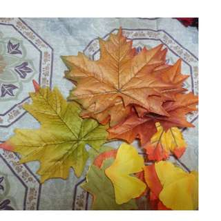 Moving out sale / Clearance / garge sale/Maple leaf for school project, different types of leaves for decorative, canada, symbol,