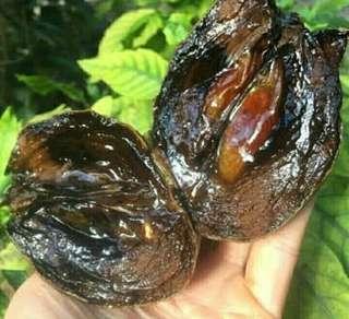 Black Sapote Sawo Hitam 1 Meter