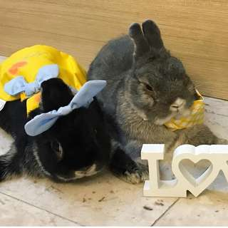 June Promo! 10% off all items purchase. Handmade clothing and beanies for Bunnies and Guinea Pigs
