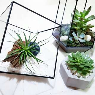 Geometric Terrarium for Mother's day