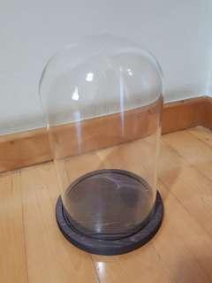Dark brown wood glass dome/bell jar