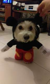 Mickey Mouse outfit - for medium sized dogs