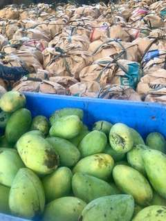 Fresh Quality Ripe Mangoes
