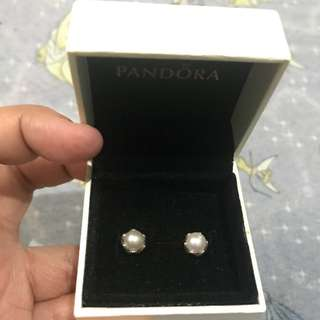 Pandora Grand Pearl Stud Earrings (Price is Final)