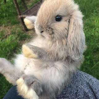 Abandoning bunnies