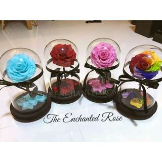 Mother's Day Roses: Real Ecuadorian Preserved Rose in light Glass Dome. Lasts up to 5 yrs with minimal care