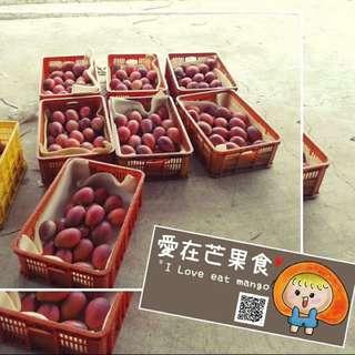 ♦️愛在芒果食♦️枋山愛文芒果👉🏻現採現寄👉🏻自產自銷