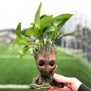 Groot the Avengers Pot