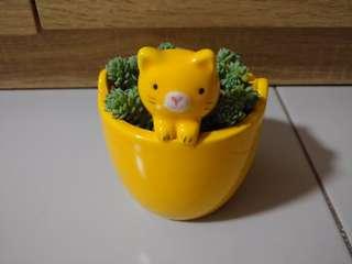 Happy Plant - Succulent cactus