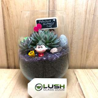 Perfect Gift for Mother's Day/ Mum's Day/ Anniversary/ Birthday/ Congrats/ Farewell/ House warming/ Event Gifts- Real Plant Succulents/ Cactus Terrarium
