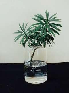 簡約風玻璃花瓶 / 透明花瓶 / 植物 / 玻璃 / 簡約風 / 文字玻璃花瓶