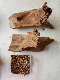Driftwood (2 similar sizes available)