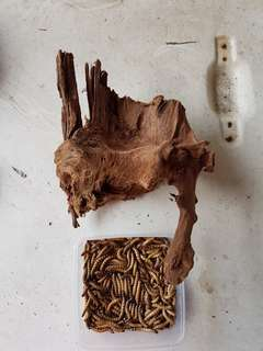 Driftwood  (top and sides view)