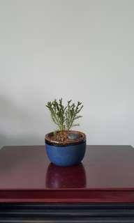 Small Cute Plant