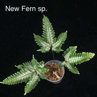 New ferns for sale
