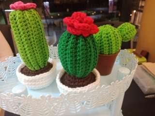 Crochet cactus display
