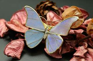 Navia Jewelry Real Butterfly Wing Jewelry Morpho aega Magnetic Brooch