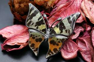 Navia Jewelry Real Butterfly Wing Jewelry Urania ripheus Silver Brooch Pendant