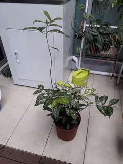 Easy indoor/outdoor plant