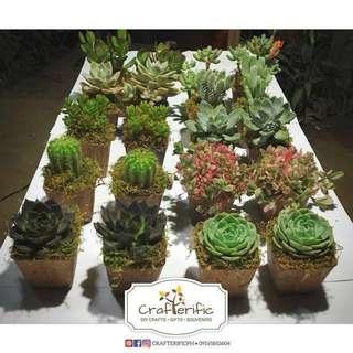 Real Cactus & Succulents Souvenirs | Giveaways
