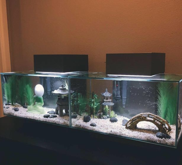 Fluval Edge Pet Supplies For Fish